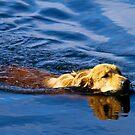 Golden Gator by Michael  Bermingham