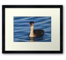 Red Eyes & Blue Water Framed Print