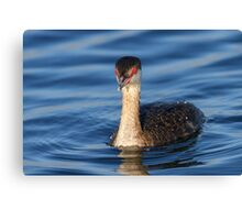 Red Eyes & Blue Water Canvas Print