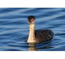 Red Eyes & Blue Water Photographic Print