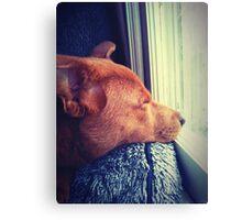 Sleeping Puppy Canvas Print