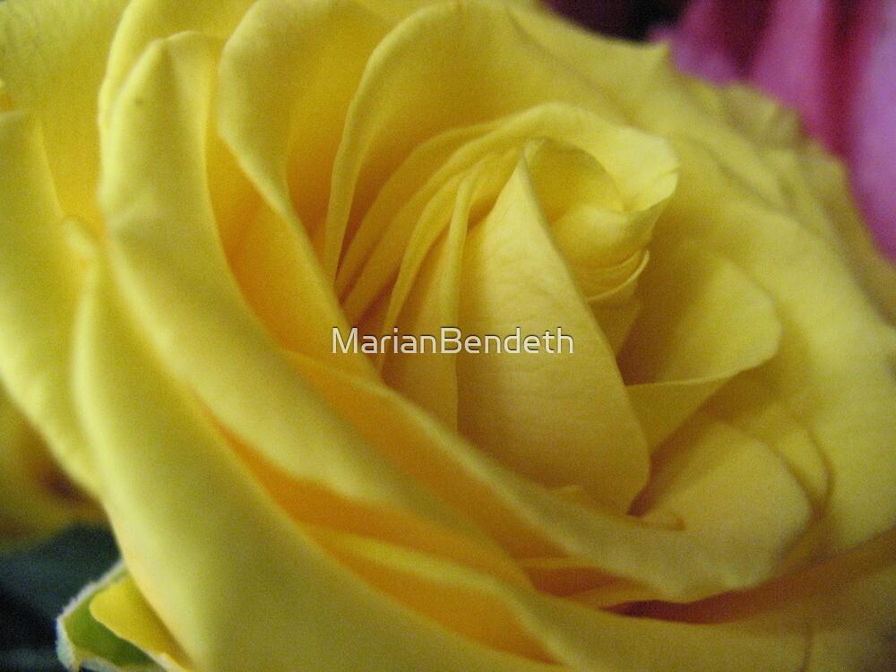 Lemon Meringue Rose by MarianBendeth