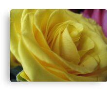 Lemon Meringue Rose Canvas Print