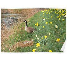 A Goose in the Garden Poster