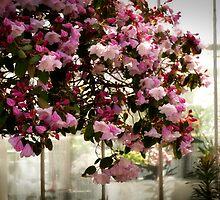 Pink blossom by Jodi Morgan