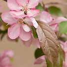 Crabapple Blossoms and Leaves by ElyseFradkin