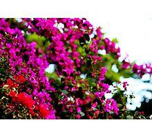 Splash of color Photographic Print