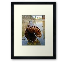 The Bamboo Reflections Framed Print