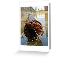 The Bamboo Reflections Greeting Card