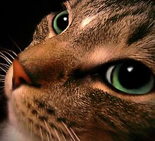 Thoughtful Eyes by Sarah Jennings