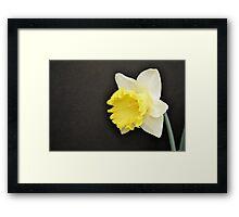 Soft Yellow Daffodil Framed Print