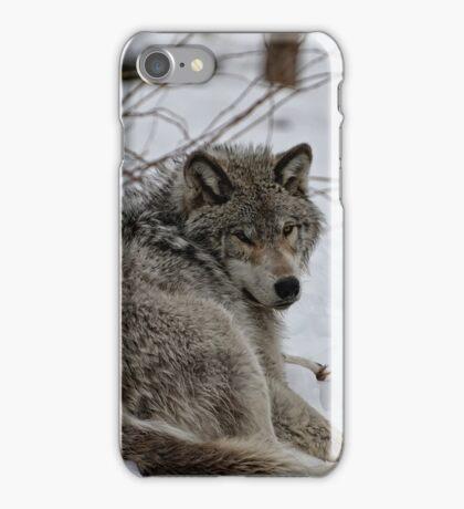 Timberwolf - Parc Omega, Montebello iPhone Case/Skin