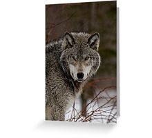 Eye Contact  -  Parc Omega, Montebello PQ Greeting Card