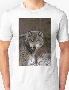 Eye Contact  -  Parc Omega, Montebello PQ T-Shirt