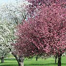 Spring Blooms by Linda Miller Gesualdo