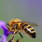 The Pollinator by duncandragon