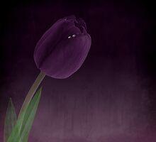 purple by Anne Seltmann