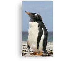 gentoo penguin Canvas Print