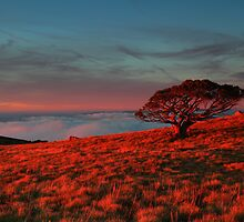 One .Mt Stirling  by Donovan wilson