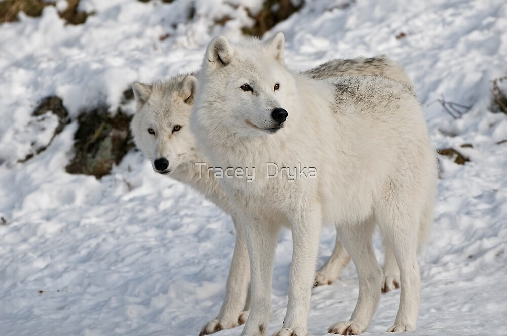 Two of a Kind by Tracey  Dryka