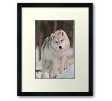 Snowbound Framed Print
