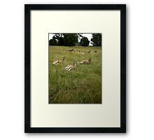 Lazing about  Framed Print