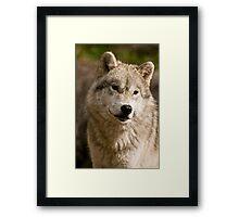 Wondering! Framed Print