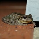 Perons Tree Frog? by Richard Cassar