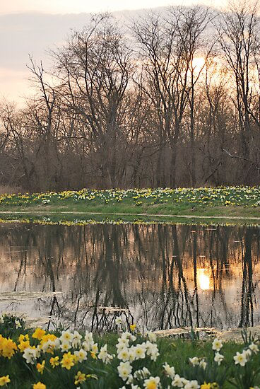 Spring Reflections on Pond by mnkreations