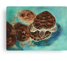 Turtle Time Canvas Print