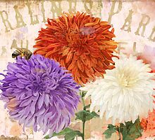 Autumn Chrysanthemums by mindydidit