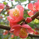 pink flower - Elvaston Castle Country Park by monkeyferret