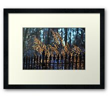Golden Remnants of Summer in a Wrought Iron Fence Framed Print