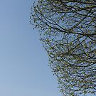 Tree in springtime by bubblehex08