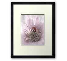 Pink Frosted Lady Framed Print