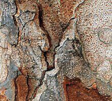 Natural Forms by Haydee  Yordan