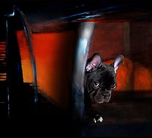 Shy frenchie. by Alexis Celona