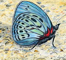 Butterfly In Blue by Kashmere1646