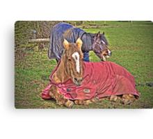 "It's a Horse""s Life~ Canvas Print"