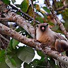 Unknown monkey in Pantanal Brazil by Marieseyes