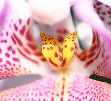 Closeup Orchid by Jhonny Bakken