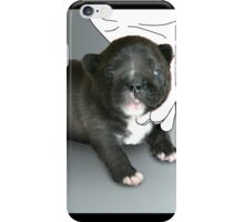 Brand new frenchie iPhone Case/Skin