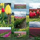 In The Fields Of The Tulips by Stephanie Exendine