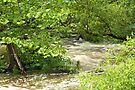 Unami Creek - Green Lane - Pennsylvania - USA by MotherNature