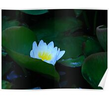 Lily Pad Paradise Poster