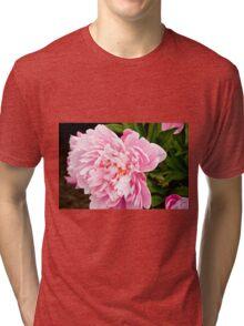 Peony - Experimental Garden, Ottawa, Ontario Tri-blend T-Shirt
