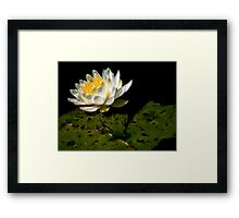 The Water Garden ~ Part Ten Framed Print