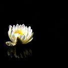 The Water Garden ~ Part Eleven by artisandelimage