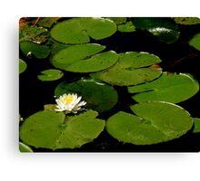 The Water Garden ~ Part Twelve Canvas Print