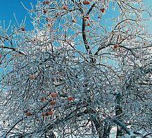 Iced Tree by Jesse Wheadon